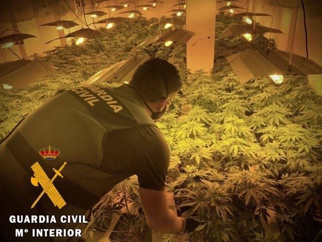 Detenido por cultivar marihuana en una casa alquilada de Roquetas de mar